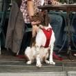Postroj pro psy do auta Tether červený