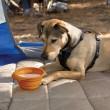 Skládací miska pro psa oranžová