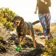 Boty pro psa Summit Trex - pár